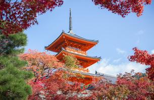 清水寺の三重塔と紅葉の写真素材 [FYI03435331]