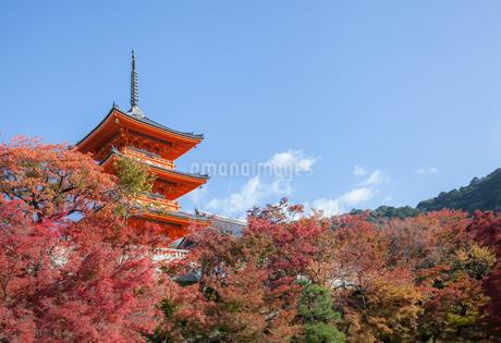 清水寺の三重塔と紅葉の写真素材 [FYI03435332]