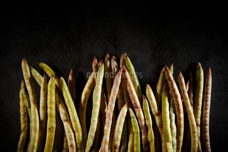 豆の写真素材 [FYI03435592]