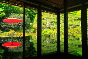 5月 緑の映り込みがきれいな竹林院の写真素材 [FYI03435687]
