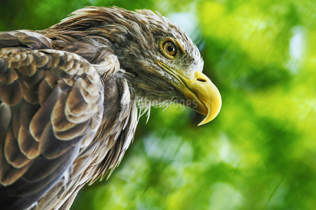 鷹の写真素材 [FYI03435739]