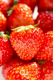 イチゴ いちご 苺の写真素材 [FYI03435791]