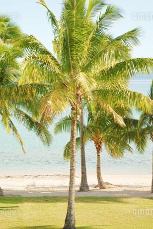 フィジー 海岸 イメージの写真素材 [FYI03435799]