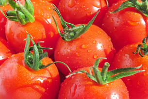 ミニトマト プチトマトの写真素材 [FYI03435805]