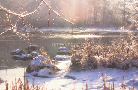 朝日に輝く湖畔の雪景色の写真素材 [FYI03436059]