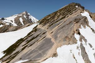鑓ヶ岳付近より残雪の白馬岳・杓子岳(北アルプス)の写真素材 [FYI03436118]
