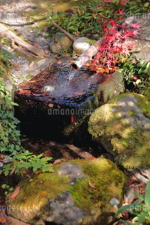 穏やかな日本庭園の写真素材 [FYI03436142]