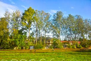 ラトビア・首都リガ~ユールマラ間の車窓から見た木々の間に見える赤い屋根の三角屋根の建物の写真素材 [FYI03436284]
