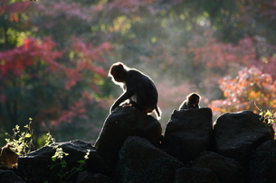 高崎山の写真素材 [FYI03436301]