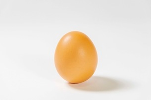 卵の写真素材 [FYI03436714]