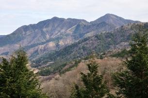 大界木山より望む西丹沢の山々の写真素材 [FYI03437763]
