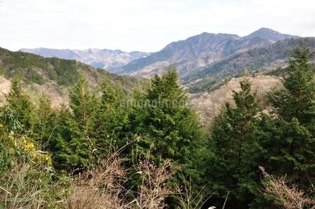 大界木山より望む西丹沢の山々の写真素材 [FYI03437766]