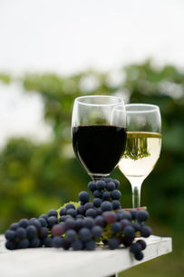 ワインの写真素材 [FYI03438421]