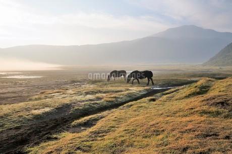 朝霧の草千里の写真素材 [FYI03438445]