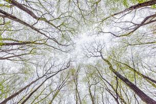 新緑の森の写真素材 [FYI03438453]