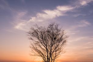 枯れ木と雲の写真素材 [FYI03438463]