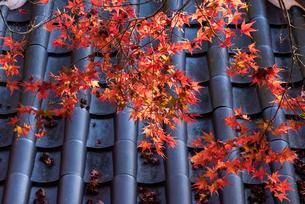 紅葉と瓦屋根の写真素材 [FYI03438468]