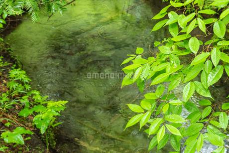 緑の清流の写真素材 [FYI03438469]