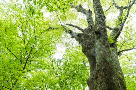 原生林の大木の写真素材 [FYI03438470]