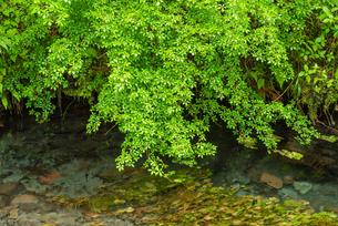 緑と清流の写真素材 [FYI03438472]