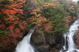 滝と紅葉の写真素材 [FYI03438579]