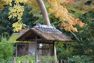 田舎の秋の写真素材 [FYI03438744]