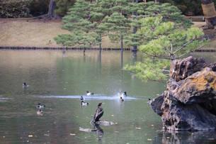 鳥たちの日常の写真素材 [FYI03438746]