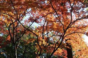 秋晴れの写真素材 [FYI03438783]