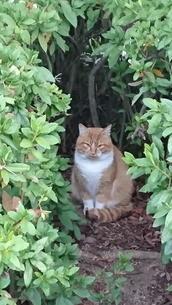 野良猫の写真素材 [FYI03438809]