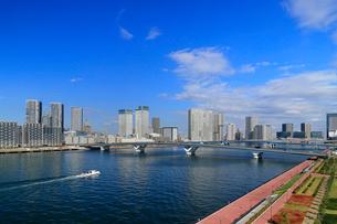 豊洲市場から見る晴海・豊洲地区の街並みの写真素材 [FYI03438971]