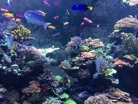色鮮やかな魚たちが泳ぐ水族館の写真素材 [FYI03439205]