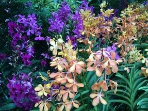 植物園の色とりどりの花の写真素材 [FYI03439232]