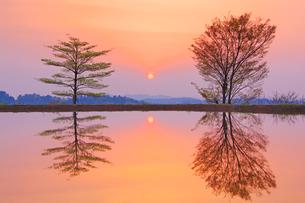 星峠の棚田の水鏡と朝日の写真素材 [FYI03439469]