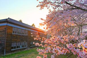 さくら国際高等学校のソメイヨシノと朝日の写真素材 [FYI03439609]