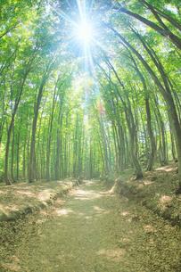 新緑のブナ林と木もれ日と道の写真素材 [FYI03439722]