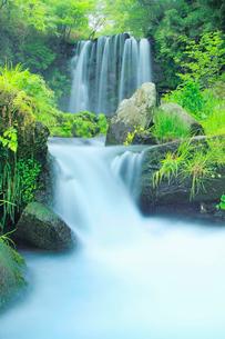 新緑の唐沢の滝の写真素材 [FYI03439724]