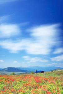 霧ヶ峰のレンゲツツジと流れる雲と山小屋と美ヶ原遠望の写真素材 [FYI03439740]