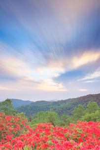 武石峰のレンゲツツジと朝の流れる雲の写真素材 [FYI03439753]
