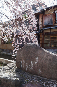 祇園白川のかにかくに碑と桜の写真素材 [FYI03439854]