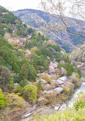 亀山公園展望台から臨む保津川と大悲閣千光寺の春の風景の写真素材 [FYI03439862]