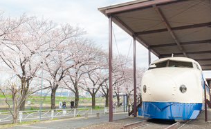 新幹線公園の0系新幹線と満開の桜の写真素材 [FYI03439863]