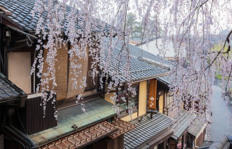 産寧坂の家並みと枝垂桜の写真素材 [FYI03439923]