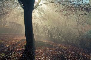 初冬の頃の写真素材 [FYI03440051]
