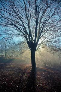 初冬の頃の写真素材 [FYI03440052]