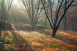 初冬の頃の写真素材 [FYI03440058]