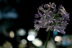 都心に咲く夜の花の写真素材 [FYI03440197]