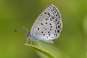 白い蝶の写真素材 [FYI03440255]