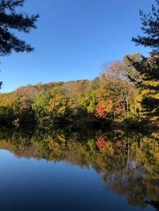 秋の木々と空の写真素材 [FYI03440318]
