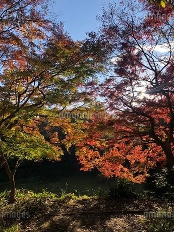 紅葉の風景の写真素材 [FYI03440319]