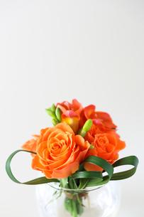 オレンジ色のバラの写真素材 [FYI03440579]